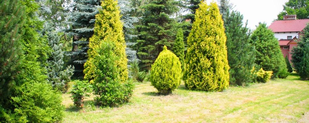 Teren zielony - Noclegi Nowizna - Dolny śląsk